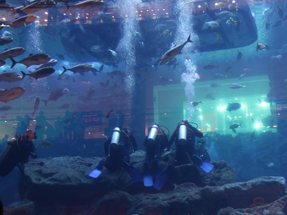colourclub-dubai-aquarium2