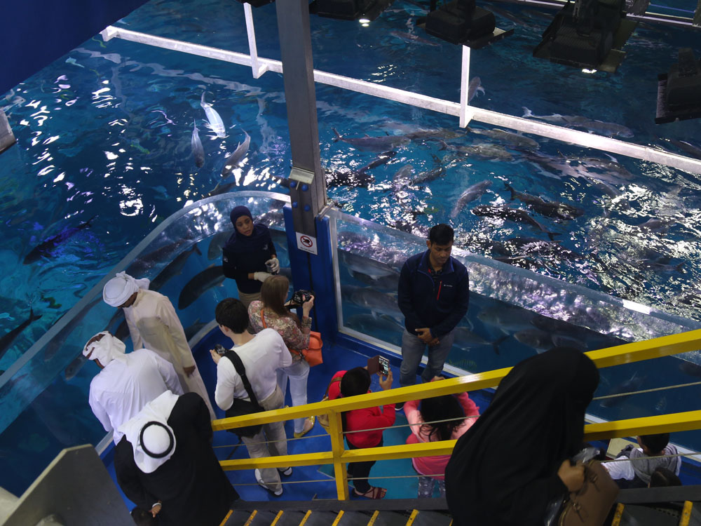 colourclub-dubai-aquarium4