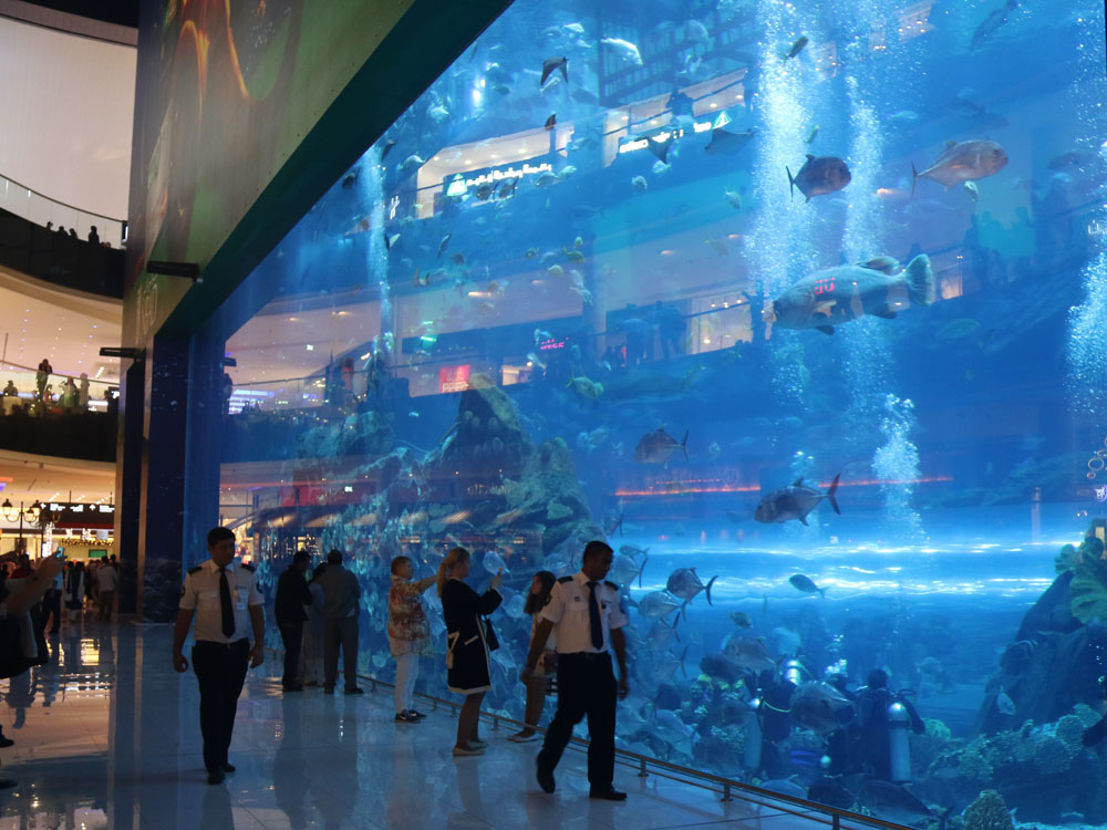 colourclub-dubai-mall-aquarium