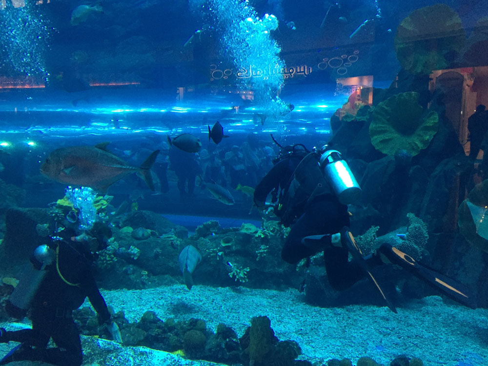 colourclub-dubai-mall-aquarium7