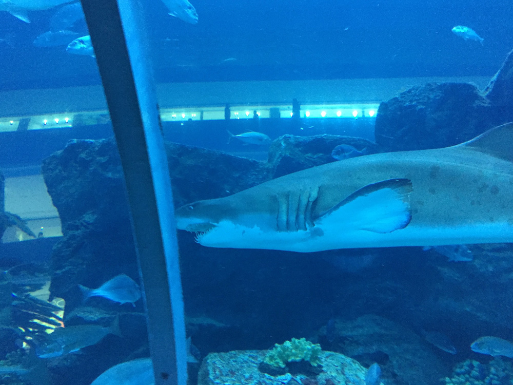 colourclub-dubai-mall-aquarium8