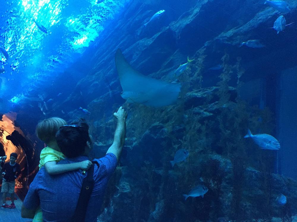colourclub-dubai-mall-aquarium9